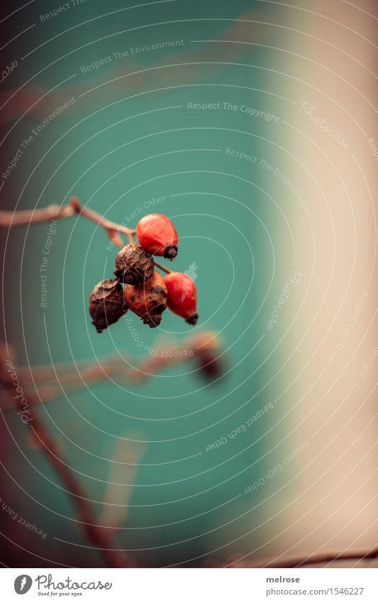 rot-türkis Stil Design Umwelt Natur Frühling Schönes Wetter Pflanze Blume Sträucher Blüte Wildpflanze Zweige u. Äste Garten Farbfleck Farbstoff Blühend leuchten