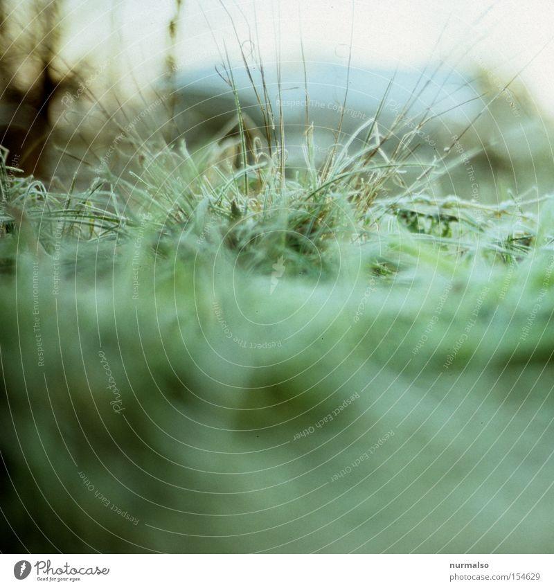 zartes Frostgrün Gras Rasen Sportrasen buschig Halm kalt Winter Morgen Natur frieren Schnee Nacht aufwachen Blick Park