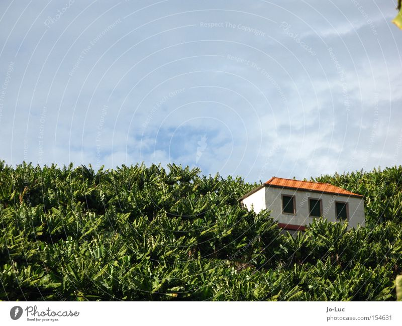 alles banane Banane Feld Pflanze Stauden grün Baum Haus Hütte Fenster Dach Himmel Wolken blau