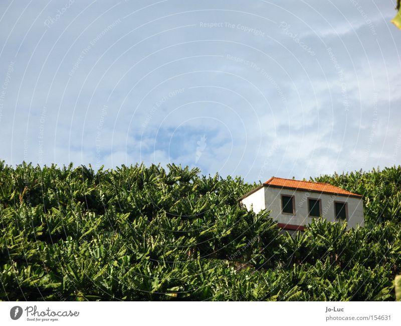 alles banane Himmel Baum grün blau Pflanze Haus Wolken Fenster Feld Dach Hütte Banane Stauden