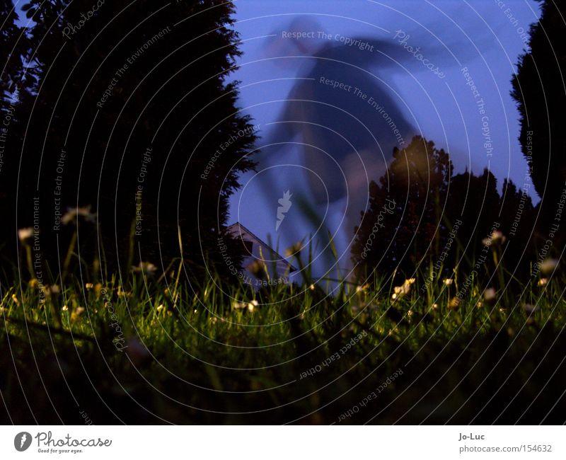 nachtschattengewächs Wiese grün Blume Blüte gelb Himmel blau Nacht dunkel Schatten Langzeitbelichtung Unschärfe Bewegung Mensch