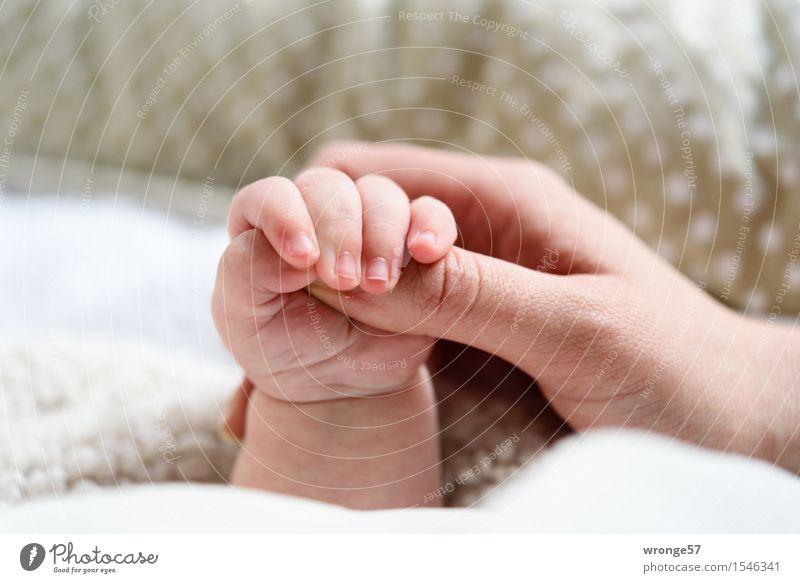 Halt Baby Mädchen Arme Hand Finger 2 Mensch 0-12 Monate 30-45 Jahre Erwachsene festhalten Zusammensein grau rosa weiß Menschlichkeit Glück haltend klein