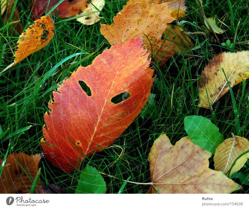 """Teufels"" Blätter - Maskenball Natur grün schön Baum rot Blatt Gesicht Wiese Herbst Gras Angst außergewöhnlich wild verrückt Macht Boden"