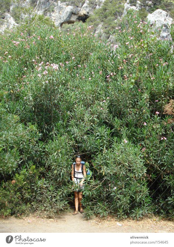 unterm oleander Oleander Blume Sträucher Frau Sardinien Pflanze groß Blüte Sommer