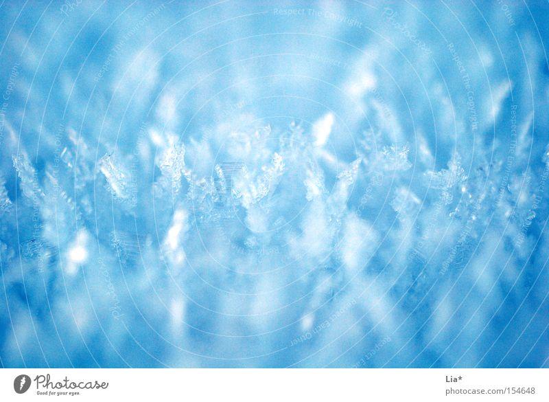 frostig kalt Eis Frost frieren Kristallstrukturen Makroaufnahme Schnee Eiskristall Winter blau Nahaufnahme