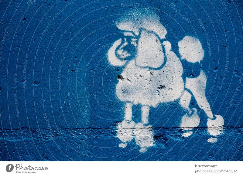 Pudelkönig Stil schön Subkultur Haare & Frisuren Tier Haustier Hund Königspudel 1 Coolness blau weiß Graffitti Stencil Schablone Farbfoto Außenaufnahme