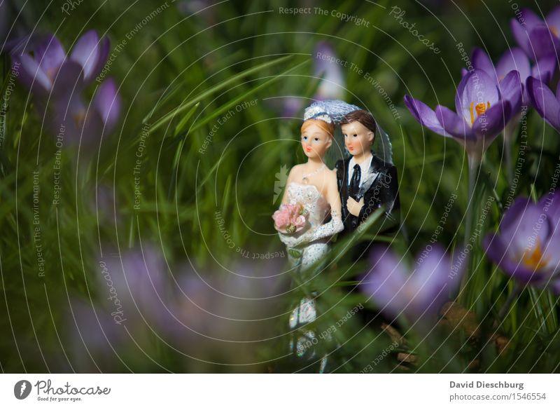 Zu zweit ist es schöner Hochzeit Frau Erwachsene Mann Paar Partner Körper Frühling Sommer Schönes Wetter Blume Garten Wiese Kleid Anzug Glück Zufriedenheit