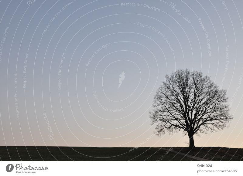 Winterlandschaft Schneelandschaft Silhouette Baum Eiche Horizont Wege & Pfade Frost ruhig Schönes Wetter Einsamkeit Traurigkeit