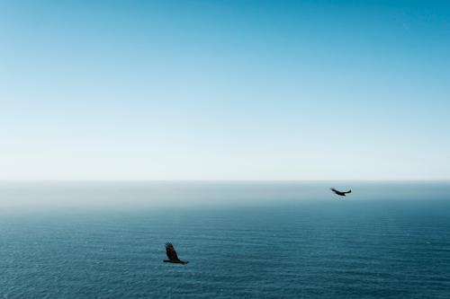 Learning to Fly Himmel Natur Ferien & Urlaub & Reisen Sommer Meer Erholung Landschaft ruhig Tier Ferne Strand Umwelt Freiheit Vogel Zufriedenheit Wellen