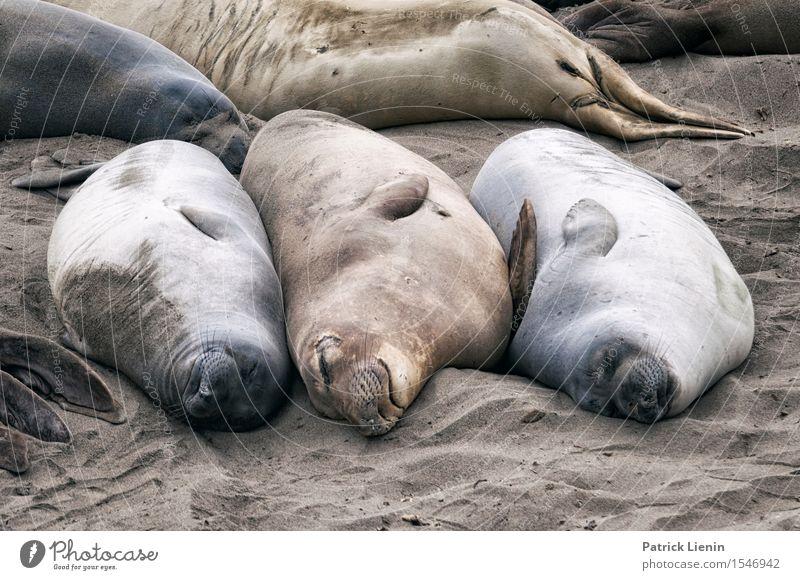 Schönes Leben Natur Sommer Meer Erholung ruhig Tier Ferne Strand Umwelt Freiheit Sand Zufriedenheit Wetter Wildtier Ausflug Tiergruppe
