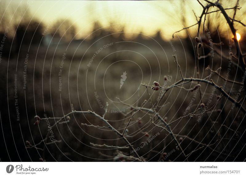 Frostiger Morgen Natur schön Sonne Winter kalt ästhetisch Frost Sträucher Ast wild fein Stachel Hagebutten