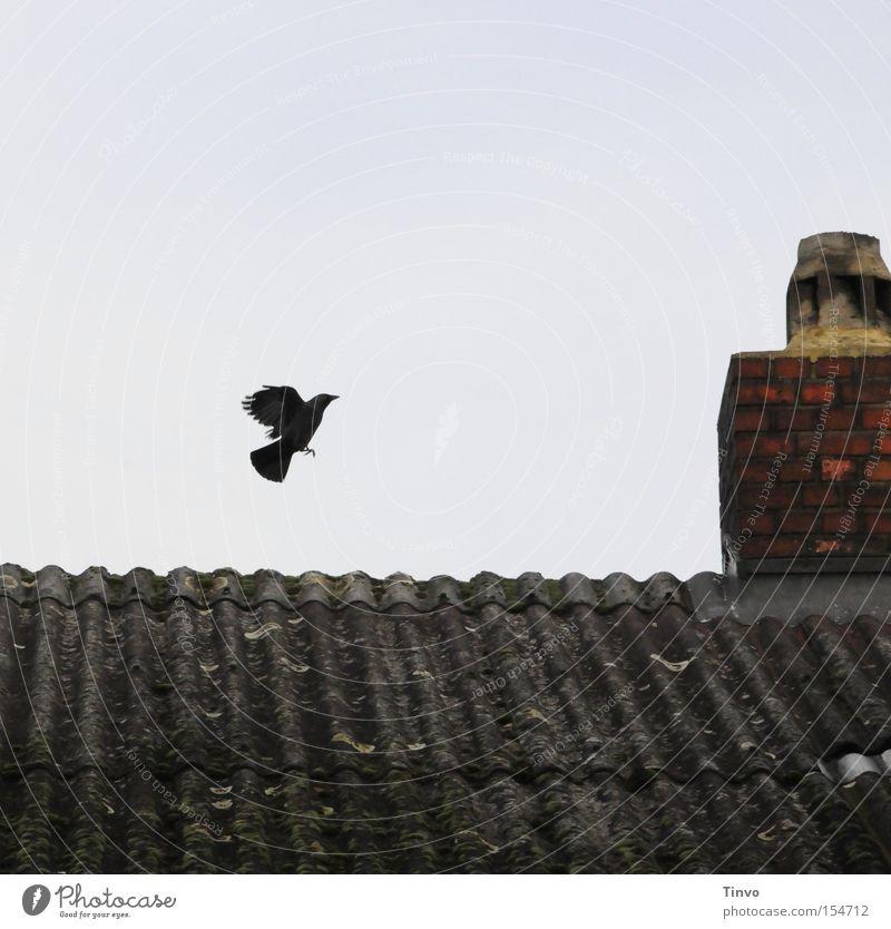 Ein Flügelschlag Himmel Vogel fliegen Beginn Luftverkehr trist Dach Backstein Schornstein Märchen Abheben Dohle Hexenhaus