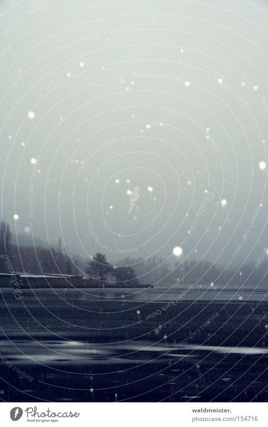Schnee an der Müritz Wasser Baum Winter kalt Schneefall See Eis Frost Mecklenburg-Vorpommern