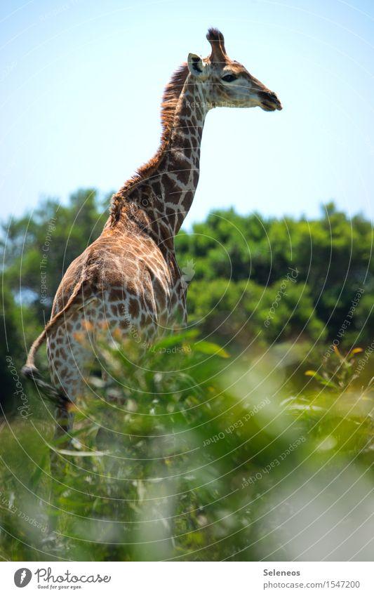 schöne Aussicht Natur Ferien & Urlaub & Reisen Sommer Sonne Tier Ferne Umwelt natürlich Tourismus Wildtier Ausflug Schönes Wetter Fernweh Sommerurlaub