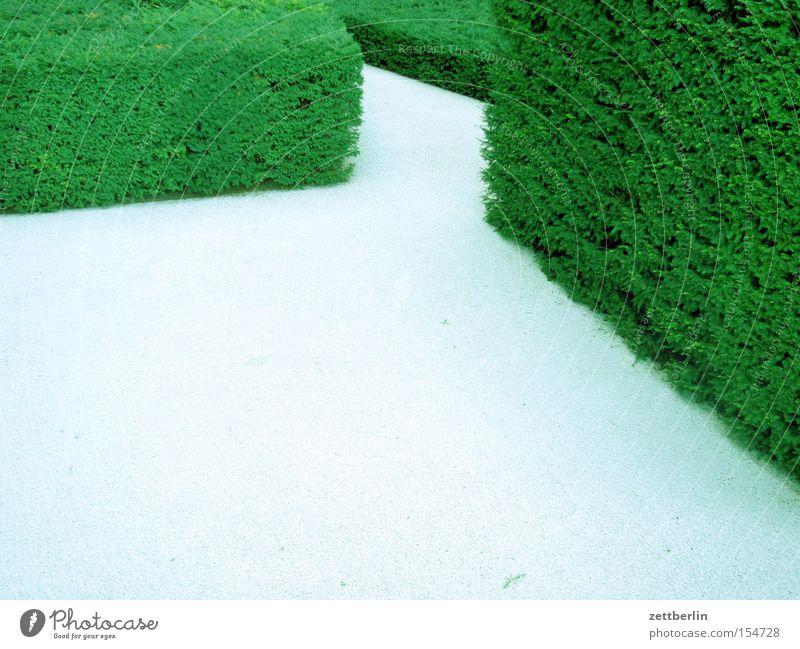 Versteckter Frühling grün Erholung Garten Wege & Pfade Park Suche Vertrauen Hecke Irrgarten Labyrinth Missverständnis Irrweg