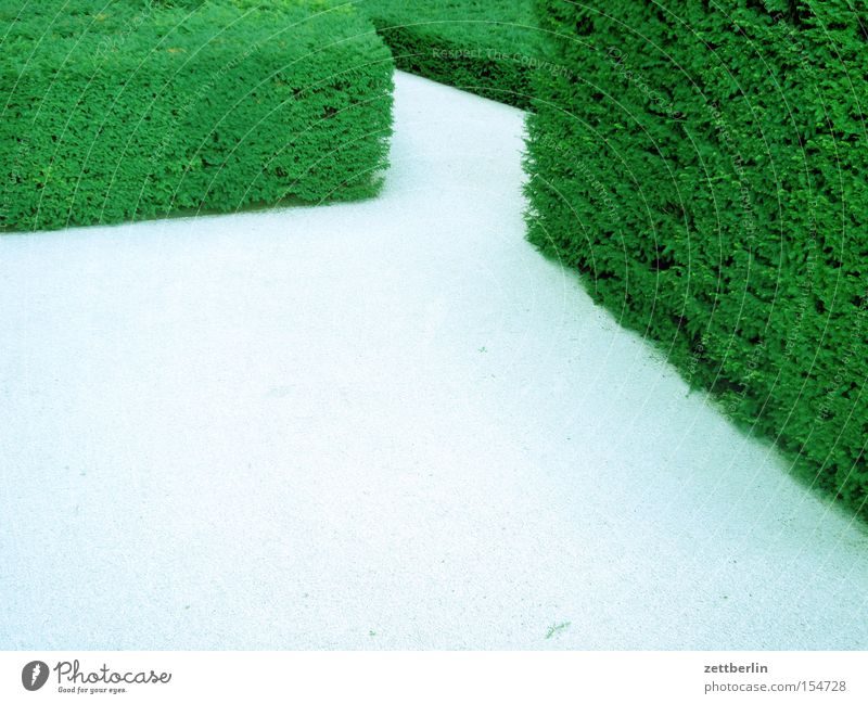 Versteckter Frühling grün Hecke Garten Irrgarten Irrweg Labyrinth Park Erholung Wege & Pfade Suche Missverständnis Vertrauen
