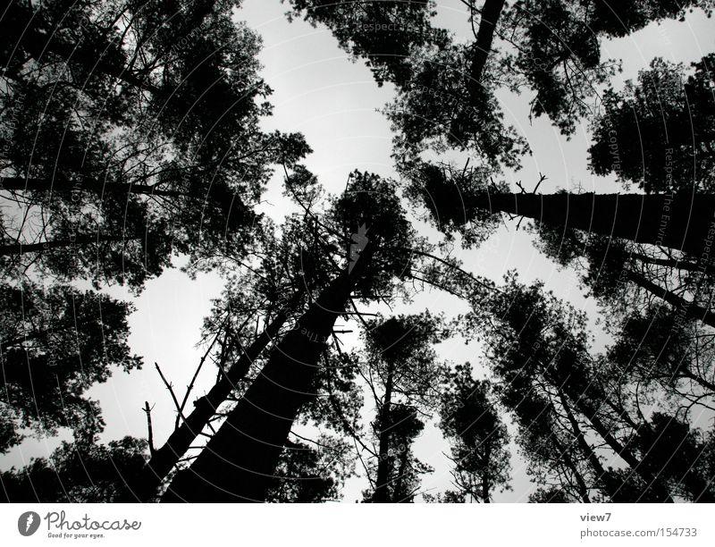 Rodtschenko-Typ ruhig Winter Natur Himmel Baum Wald oben Einsamkeit Baumkrone Nadelwald spukhaft Abend Nacht Silhouette Blick
