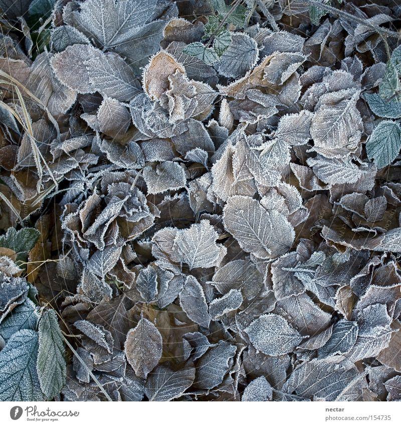 Frosties grün blau Pflanze Winter ruhig Blatt kalt Schnee Tod grau Eis braun Erde Trauer Boden