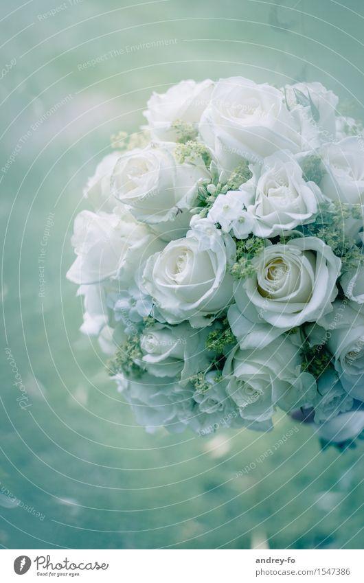 Blumenstrauß Lifestyle elegant Stil Feste & Feiern Valentinstag Muttertag Hochzeit Geburtstag Pflanze Rose Glück grün weiß Gefühle Liebe Treue Liebesaffäre