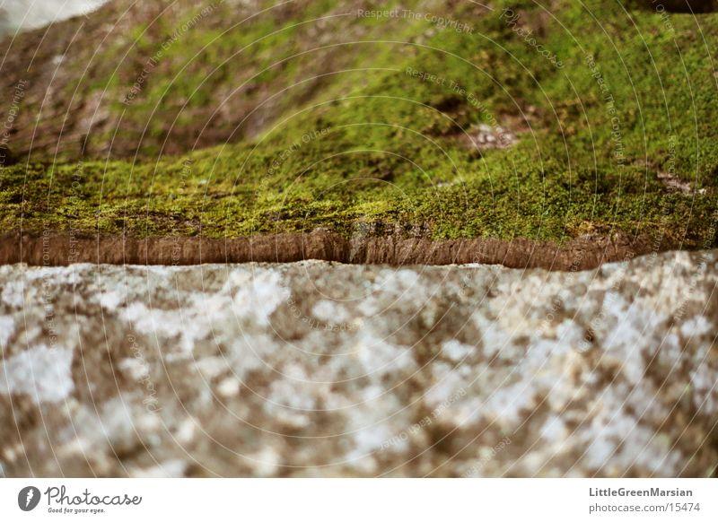 baum zu fels Baum grün grau hart weich Unschärfe Felsen Stein Kontrast Moos
