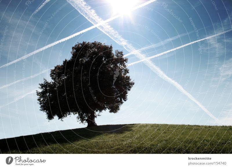 Traumbaum-Luftraum Herbst Baum Wolken Hügel Wiese Gras Natur Spaziergang Schweiz Himmel Laubbaum Umwelt grün Blatt Flugzeug Luftverkehr Kondensstreifen