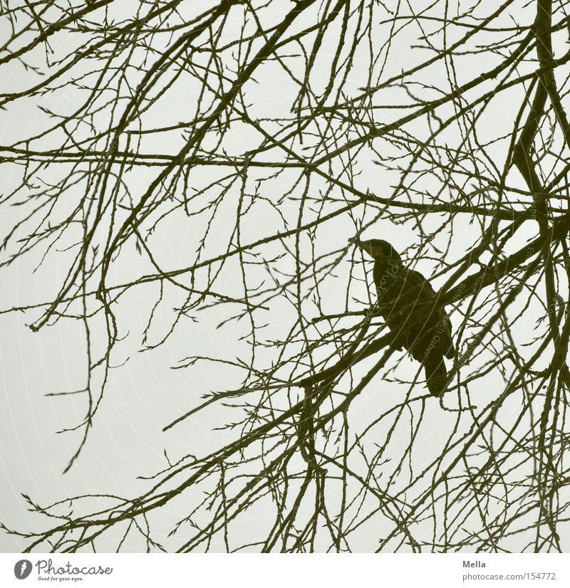 Kormoranwinter Natur Baum Einsamkeit Tier grau Vogel Umwelt sitzen natürlich Geäst hocken Zweige u. Äste