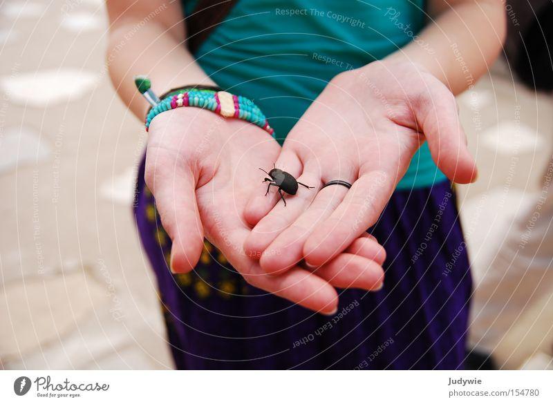 Käfer. Frau Hand Sommer Tier schwarz Stein Finger groß Insekt Ekel Käfer krabbeln Fühler Mineralien