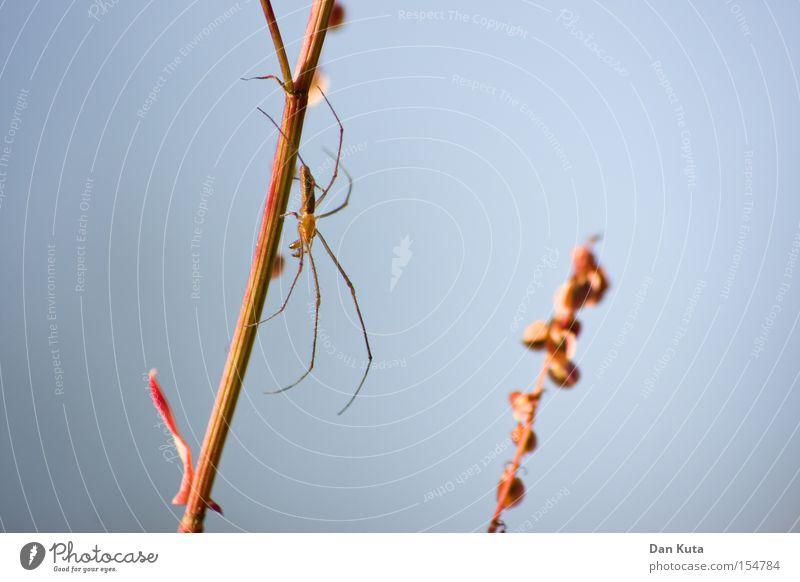 200 ins Netz gegangen! Makroaufnahme Spinne Natur krabbeln Lupe Angst Panik filigran dünn Nahaufnahme vergrößert schön Detailaufnahme Streckerspinne Tetragnatha