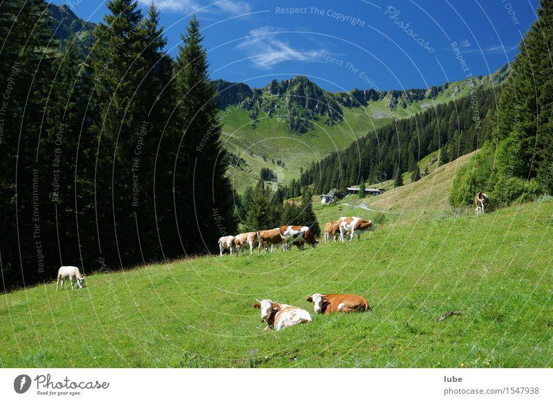 Schön ist das Almenleben Natur grün Sommer Landschaft Wald Berge u. Gebirge Umwelt Felsen Zufriedenheit Klima Tiergruppe Schönes Wetter Gipfel Landwirtschaft Alpen Wolkenloser Himmel