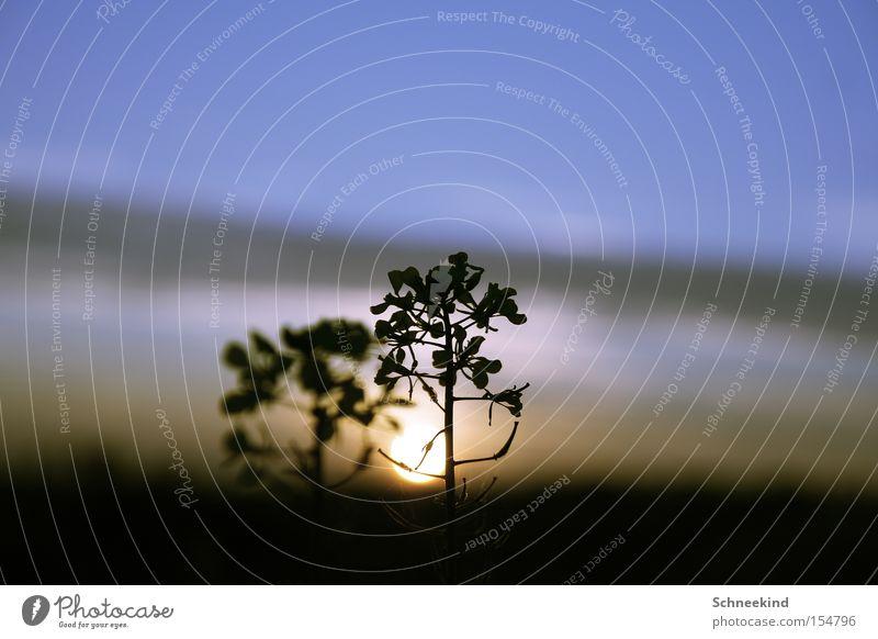 The sun goes down Natur schön Himmel Baum Sonne Pflanze Zweig Lichtspiel Heilpflanzen Unkraut