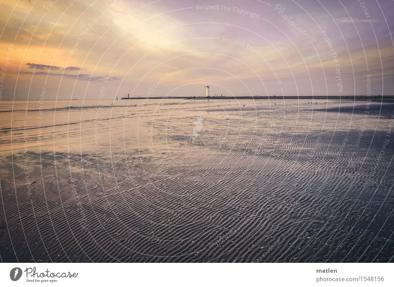 Spuren im Sand Natur Landschaft Wasser Himmel Wolken Horizont Sonnenaufgang Sonnenuntergang Sommer Wetter Wellen Strand Ostsee exotisch maritim gelb grau