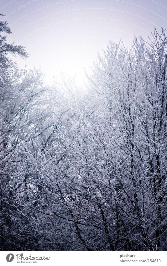 (r)auf zum raureif blau Baum Winter Wald kalt Schnee Eis Frost Ast Raureif