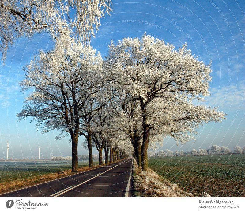 Erster Frost Winter Schnee Landschaft Himmel Wolken Eis Baum Feld salow Verkehr Straße Einsamkeit Raureif Allee Zweig Asphalt Farbfoto Außenaufnahme