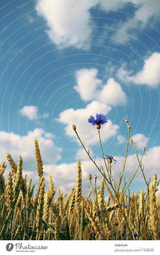 Alles bio I Farbfoto Außenaufnahme Textfreiraum links Textfreiraum oben Hintergrund neutral Tag Sonnenlicht Zentralperspektive Totale Lebensmittel Getreide