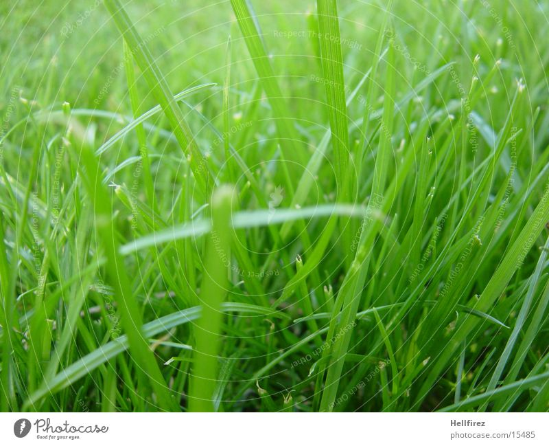 Morgenidylle Gras Frühling Makroaufnahme Frisch Geschitten