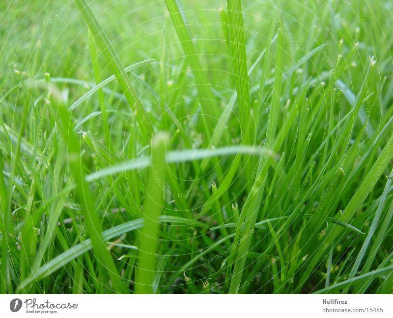 Morgenidylle Gras Frühling