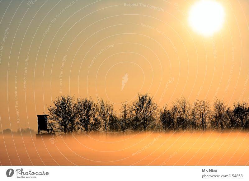 sonnennebel Nebel Bodennebel unklar Hochsitz Aussicht Sonne Sonnenlicht Schleier Licht Idylle Wäldchen Winter ruhig Himmelskörper & Weltall Stimmung