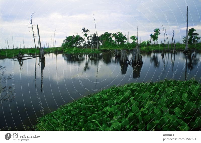 Sumpfland Natur Wasser dunkel Landschaft Stimmung USA Amerika Louisiana