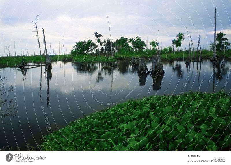 Sumpfland Natur Wasser dunkel Landschaft Stimmung USA Amerika Sumpf Louisiana