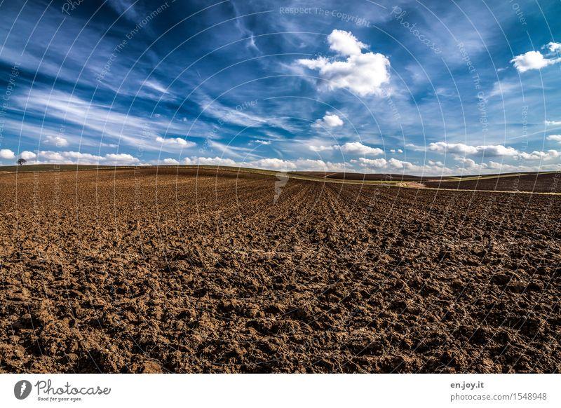 Himmel und Erde Gesundheitswesen Gesunde Ernährung Landwirtschaft Forstwirtschaft Umwelt Natur Landschaft Pflanze Urelemente Wolken Horizont Frühling Klima