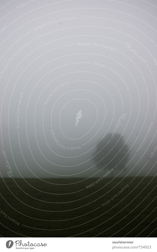 Waldmeister-Kopie Baum Nebel dunkel Textfreiraum Einsamkeit Perspektive Wand weiß schwarz Wiese Wolken Himmel Trauer Verzweiflung Simon Birr Soulstormer