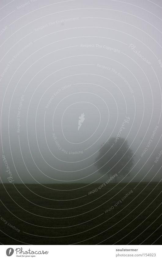 Waldmeister-Kopie Himmel weiß Baum schwarz Wolken Einsamkeit dunkel Wiese Wand Nebel Perspektive Trauer Verzweiflung Textfreiraum