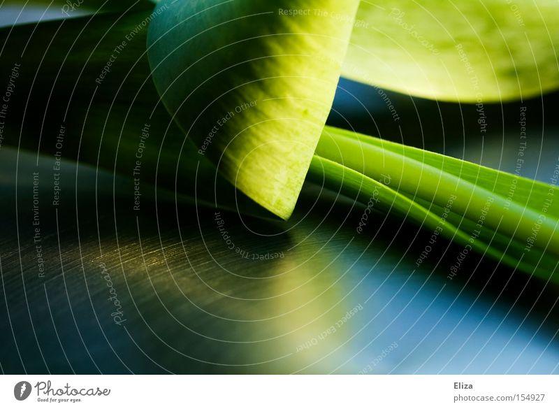 Nahaufnahme eines grünen Blattes einer Tulpe Frühling Stengel Reflexion & Spiegelung edel Natur Makroaufnahme dunkel saftig abstrakt Pflanze Reflektion modern