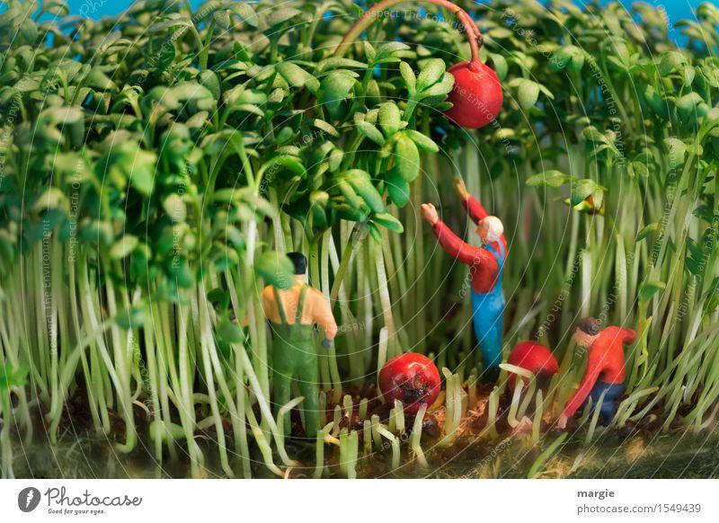 Miniwelten - Erntehelfer Mensch Mann grün rot Erwachsene maskulin Küche Beruf Gartenarbeit Handwerker