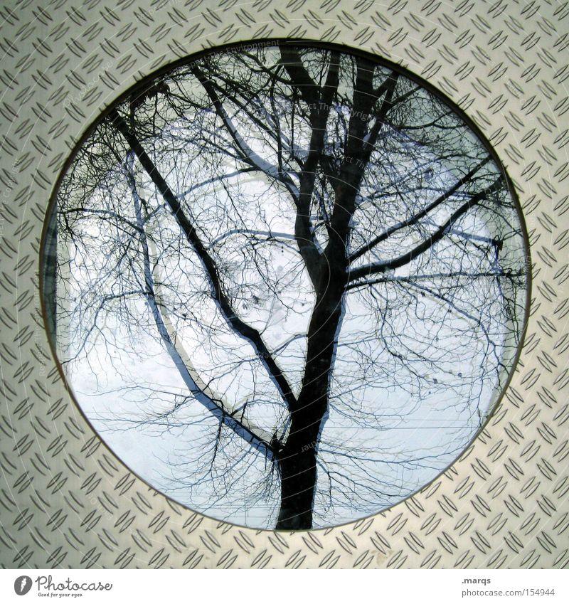Ei Baum Pflanze Herbst kalt Fenster Architektur Stil Metall Glas Angst verrückt außergewöhnlich Kreis rund einzigartig Vergänglichkeit