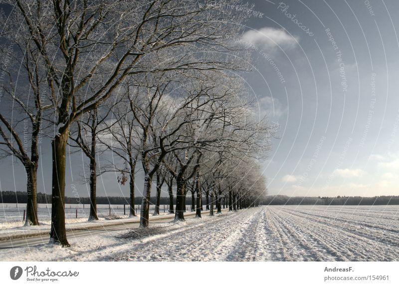 ...ein Wintermärchen Baum Sonne Winter Straße kalt Schnee Landschaft Frost Romantik Schneelandschaft Allee Wald Blauer Himmel Winterurlaub Januar Winterwald