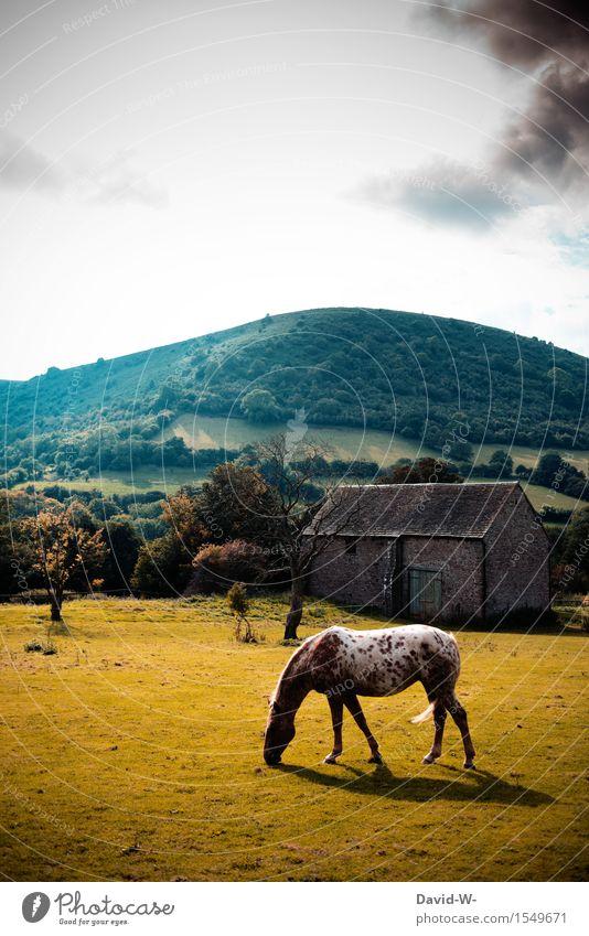 wie aus einer anderen Zeit Natur alt Sommer Landschaft Wolken Tier dunkel Umwelt gelb Wärme Herbst Frühling Kunst stehen Schönes Wetter historisch