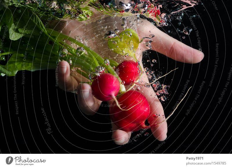 Radieschen Lebensmittel Gemüse Ernährung Bioprodukte Vegetarische Ernährung Hand 1 Mensch frisch Gesundheit lecker Sauberkeit grün rot Reinlichkeit genießen