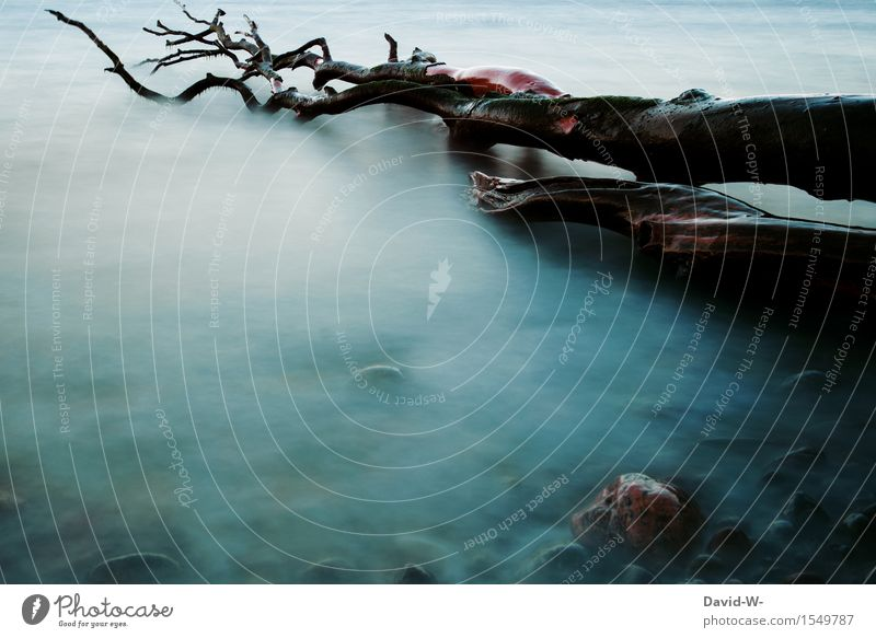 mystisch Künstler Kunstwerk Gemälde Umwelt Natur Wasser Herbst Klimawandel Unwetter Baum Küste Seeufer Flussufer alt gruselig kalt Tod Angst Feigheit