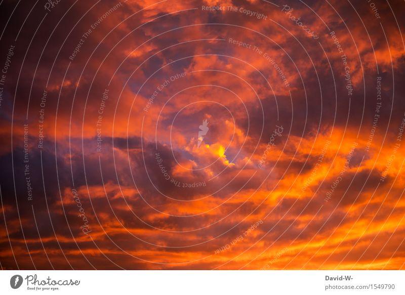 Der Himmel brennt Natur schön Sommer Sonne rot Wolken ruhig Winter Umwelt Gefühle Herbst Frühling Stimmung träumen Wetter